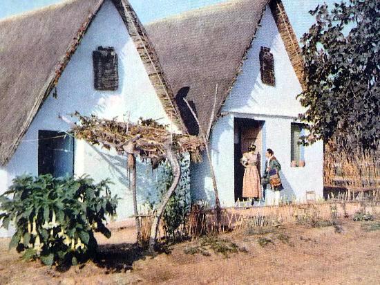 Barracas típicas de la Huerta Valenciana sobre 1940. Foto: A.Campaña y Puig Ferran.