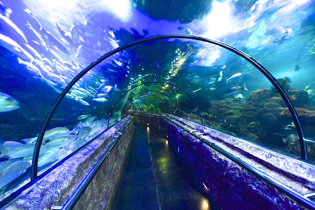 seaworld indonesia