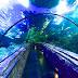 Seaworld Indonesia - Jelajah Bawah Laut Ancol