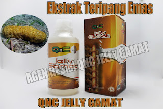 Agen Resmi Qnc Jelly Gamat Asli di Indonesia