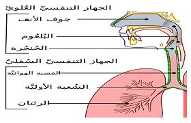 علاج التهاب البلعوم Sore throat، اعراض التهاب البلعوم Sore throat، اسباب التهاب البلعوم Sore throat، ادوية التهاب البلعوم Sore throat.
