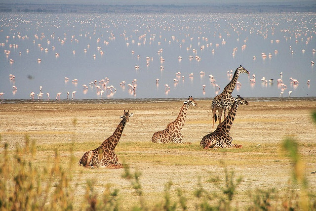 Google 3d Wallpapers Free Download Most Beautiful Places To Visit In Tanzania Most