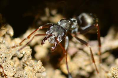4.There are 1.6 million ants in this world for every human on earth, and the weight of all those ants are same as the weight of all the humans