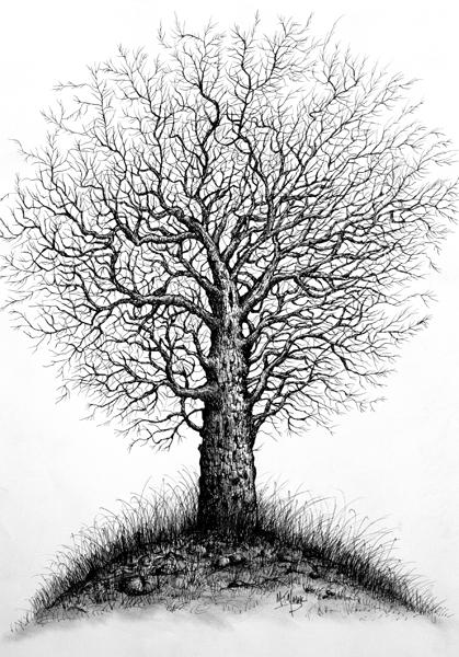 Sketsa Gambar Pohon Gambar Pemandangan