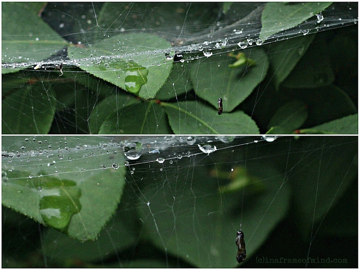 caught in spider's web