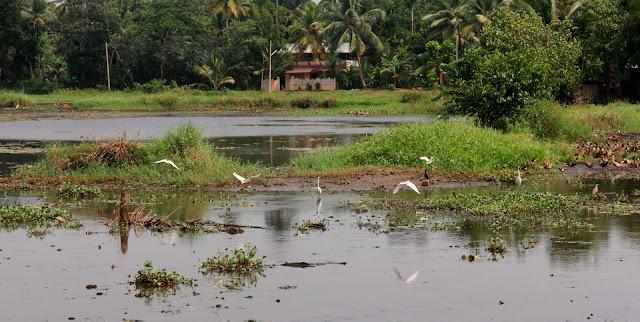 vie sauvage backwater kerala inde du sud
