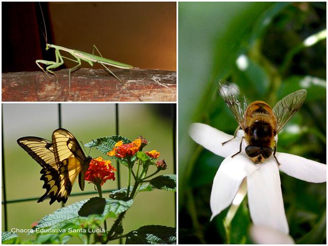 Insectos - Chacra Educativa Santa Lucía