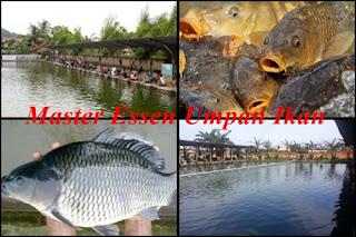Essen Umpan Ikan Mas Galatama