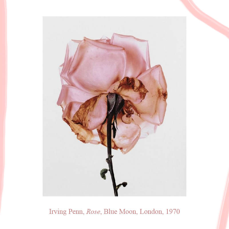 Irving Penn, Rose, Blue Moon, London, 1970