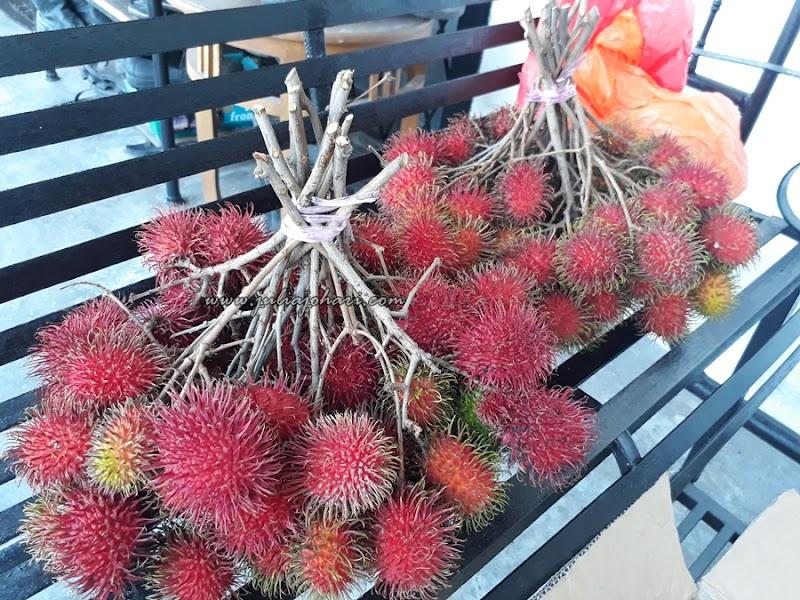 Rezeki Kebun Rambutan Gula Batu Setiap Hujung Tahun !