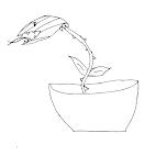 pianta carnivora da colorare