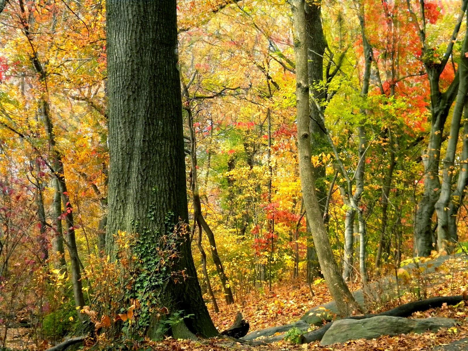 Fall Autumn Colors Clip Art Public Domain Clip Art Photos ...