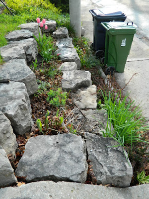 by Paul Jung Gardening Services--a Toronto Gardening Company Riverdale Front Garden Spring Cleanup Before