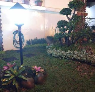 Bonsai dolar dengan taman minimalis