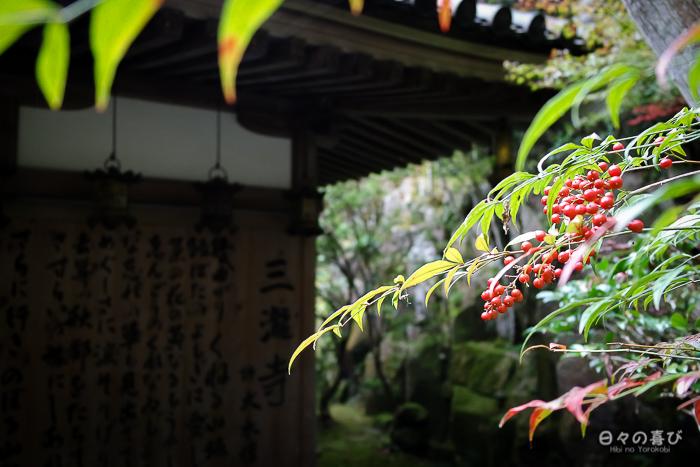 Hondo pris dans la végétation, temple Mitaki-dera, Hiroshima