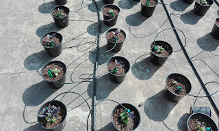 http://www.pepperagro.in/DRIP-IRRIGATION-KIT/DRIP-IRRIGATION-GARDENING-PLANT-WATERING-GARDEN-IRRIGATION-id-724833.html
