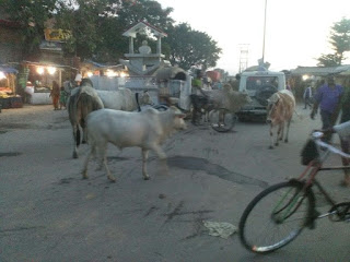 rode-animal-and-life-jaynagar