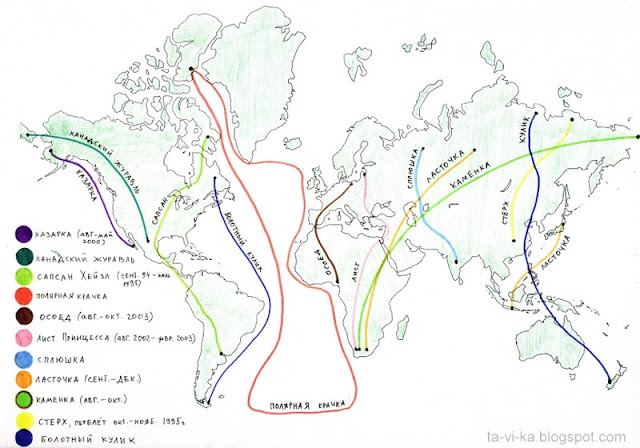 карта миграции птиц