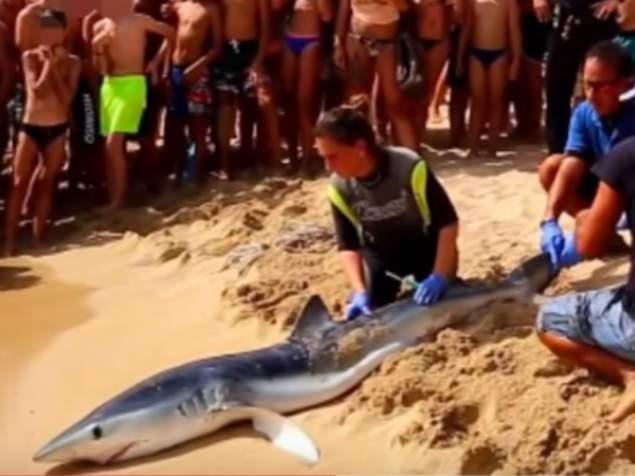 Καρχαρίας βγήκε στην στεριά
