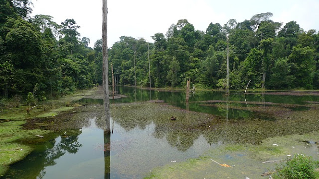 Kota Damansara Community Forest Park