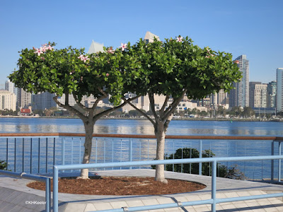 hibiscus, San Diego