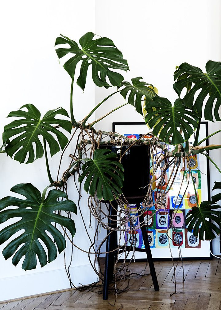 Ilblogdellaconnie cose frivole per la casa un elenco di oggetti inutili che vorrete avere - Cose per la casa ...