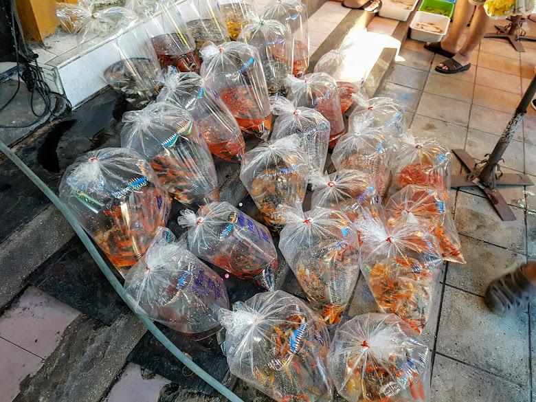 地上擺滿一袋袋的觀賞魚