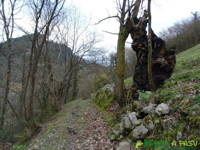 Ruta a la Pica de Peñamellera: Sendero previo a La Molinuca