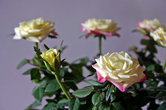 May+277a Mothers Day Flowers