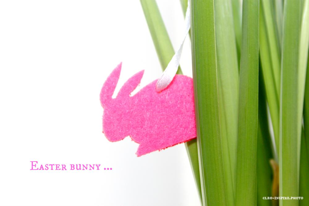 różowy zając