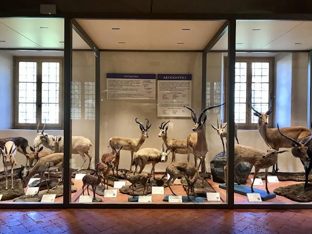 Representações de animais expostas no Museu de História Natural da Universidade de Pisa