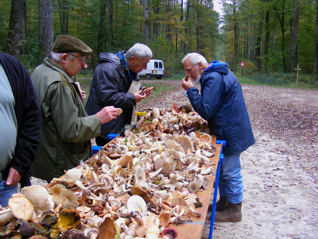 Fungi experts identifying species found on a mycology outing. Indre et Loire. France. Photo by Loire Valley Time Travel.