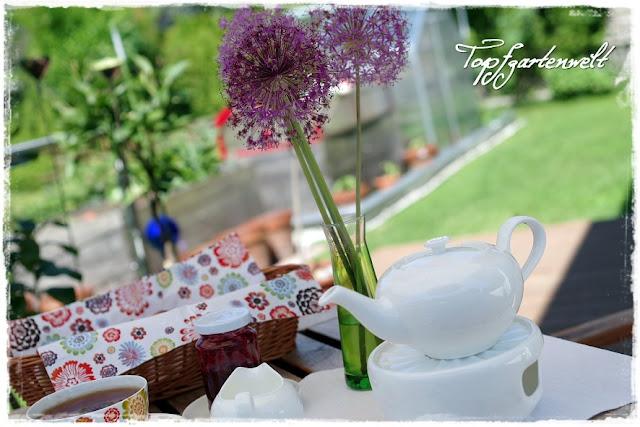 Zierlauch - Allium, Geschirr Anmut Bloom