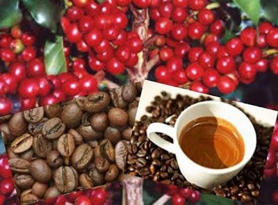Café, Bebida Globalizada