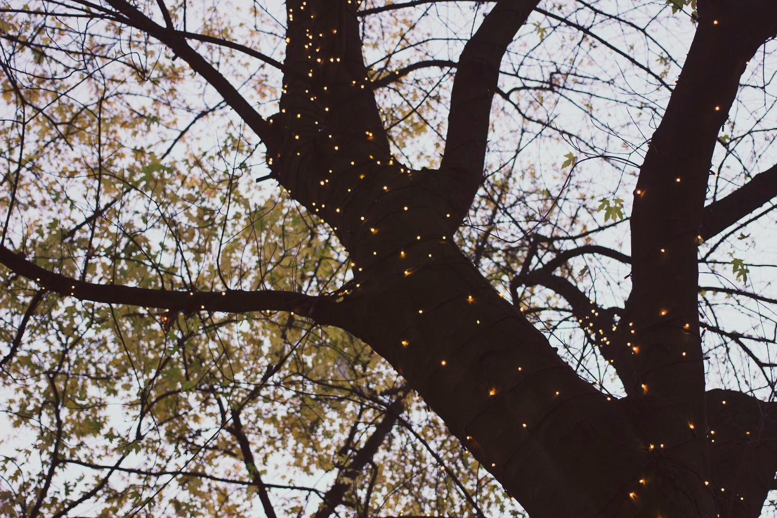 Tree, Manchester Christmas Market 2016, Fairy Lights on Tree, Katie Writes,