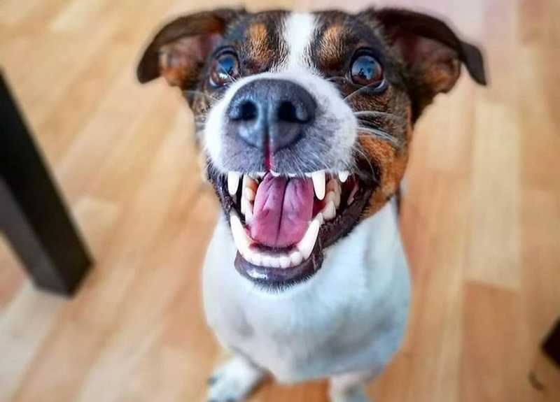 Dental Care For Dogs: What you can do against tartar
