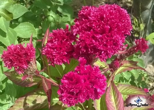 Outubro Rosa - Flores, Floral, Primavera