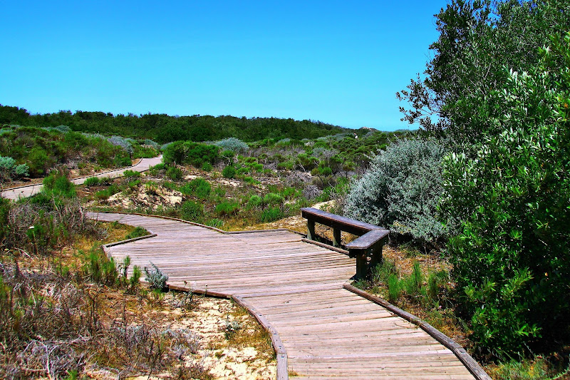 Oso Flaco Lake Boardwalk Trail Through the Dunes Central California Weekend Getaway