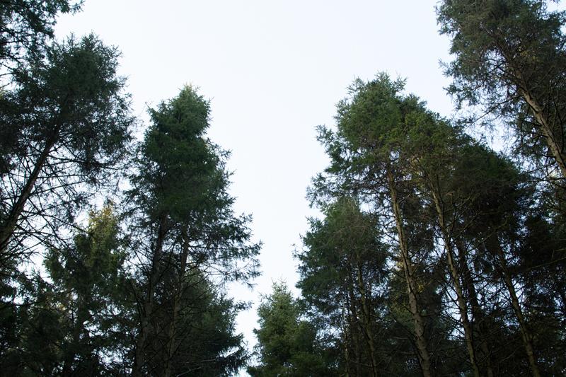 forest light trees landscape ystradfellte falls