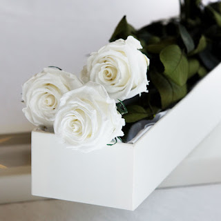preserved flower rose white