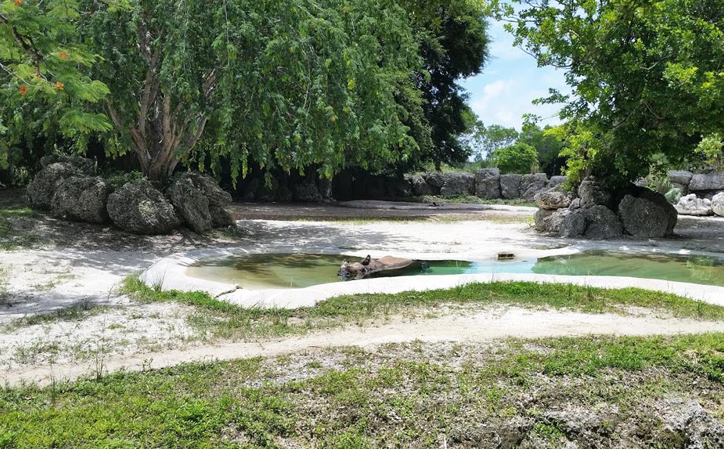 Hippopotame sous l'eau au zoo