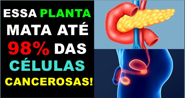 Melão de São Caetano: mata 98% das células cancerígenas, freia Diabetes e Contraindicações