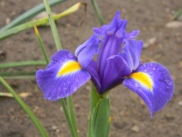 kwiat, gleba, ozdobny, żółty