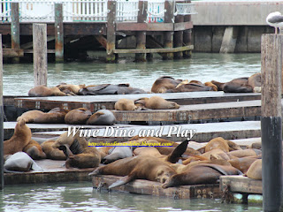 The Sea Lions resting on Pier 39 of Fisherman's Wharf next to Wipeout Grill in San Francisco