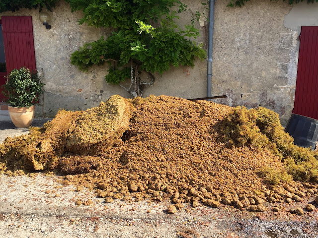 pomace  during the vendange at sauternes, sweet bordeaux