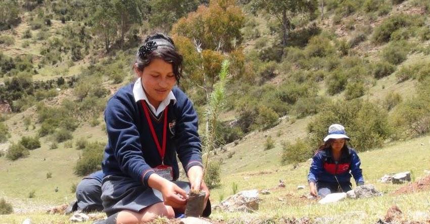 Escolares y comuneros de Junín siembran más de 2 mil pinos