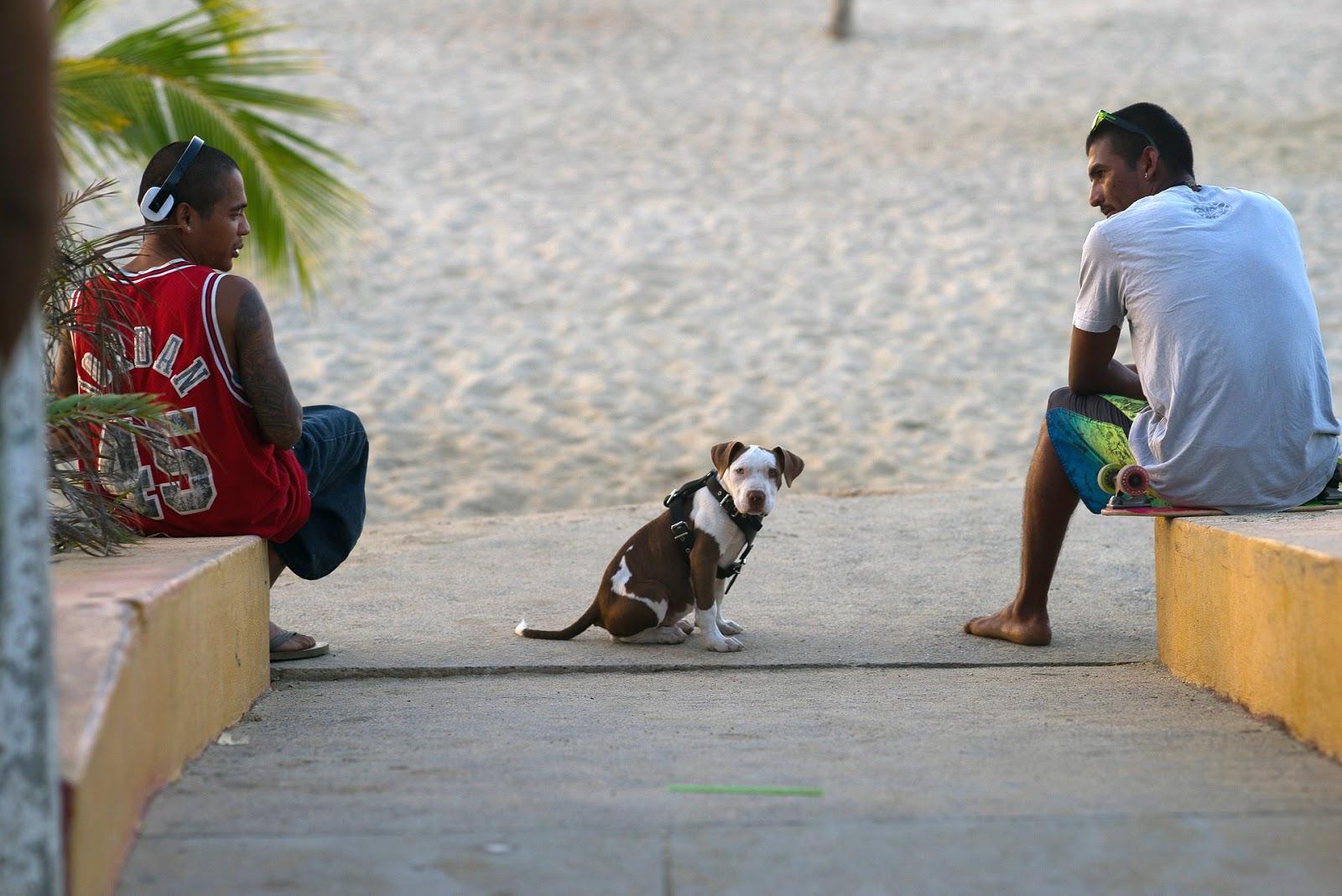 Socializing Around A Dog