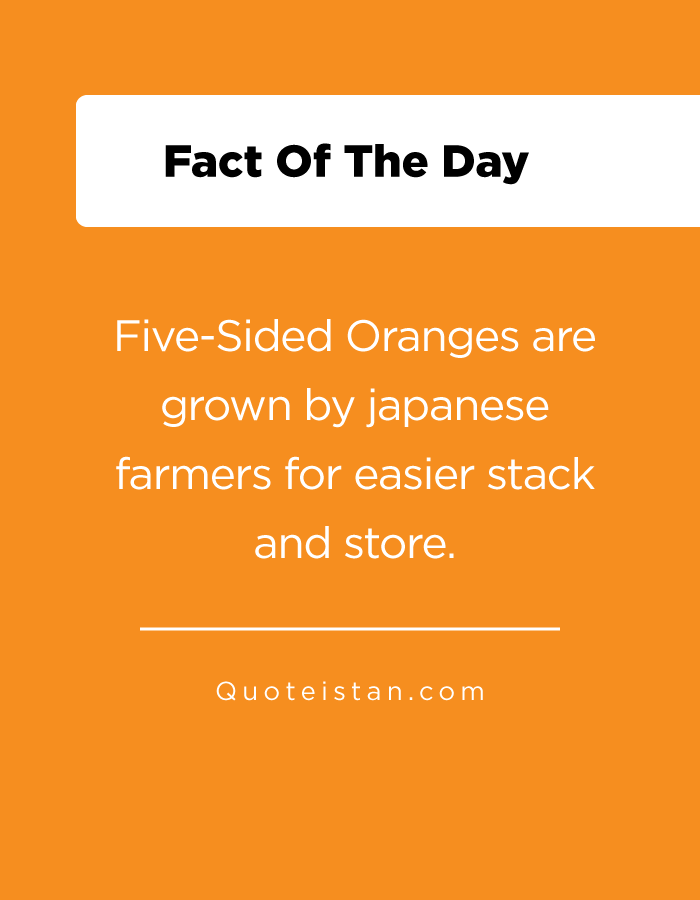 Five-Sided Oranges are grown by japanese farmers for easier stack and store.