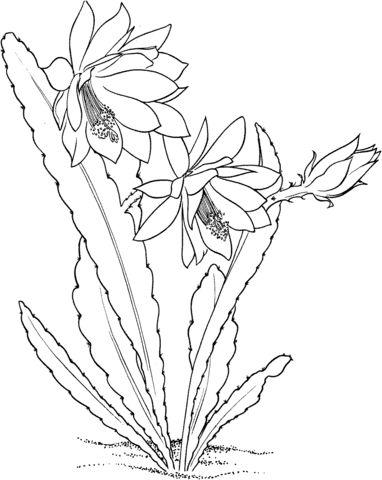 Tranh tô màu cây xương rồng đẹp
