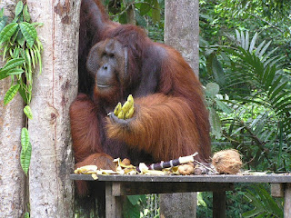 Daftar Tempat Wisata Menarik di Pulau Kalimantan